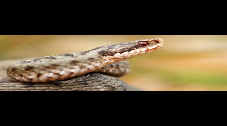 CONSEIL : N'ayez plus peur des serpents !
